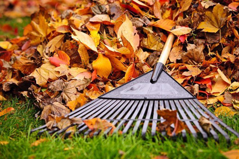 Hausmeister Dortmund Gartenpflege - Laubbeseitigung in der Herbstzeit
